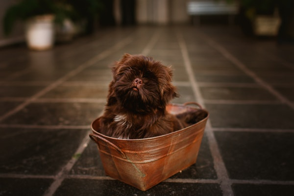 Puppy in a basket on a tile floor